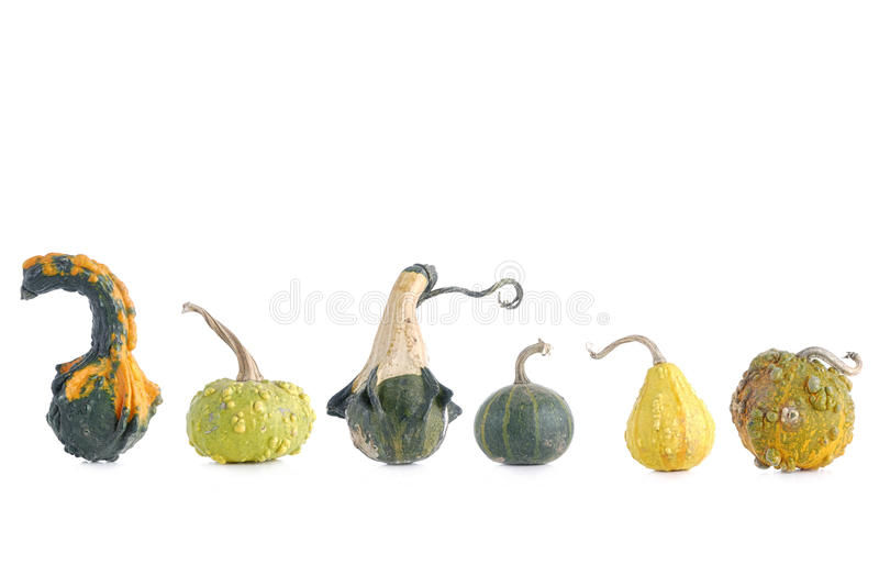 Download Summer squashes stock image. Image of garden, fruit, white - 27461865