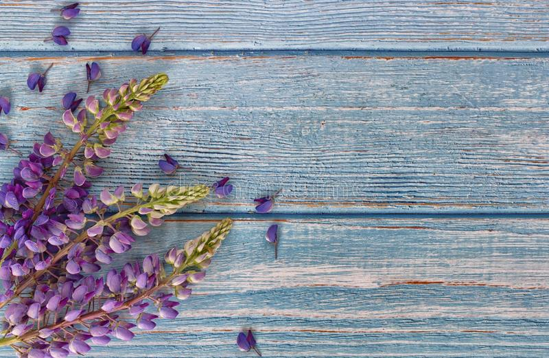 Summer stalks of purple lupins and scattered small flowers on boards of a table royalty free stock photo