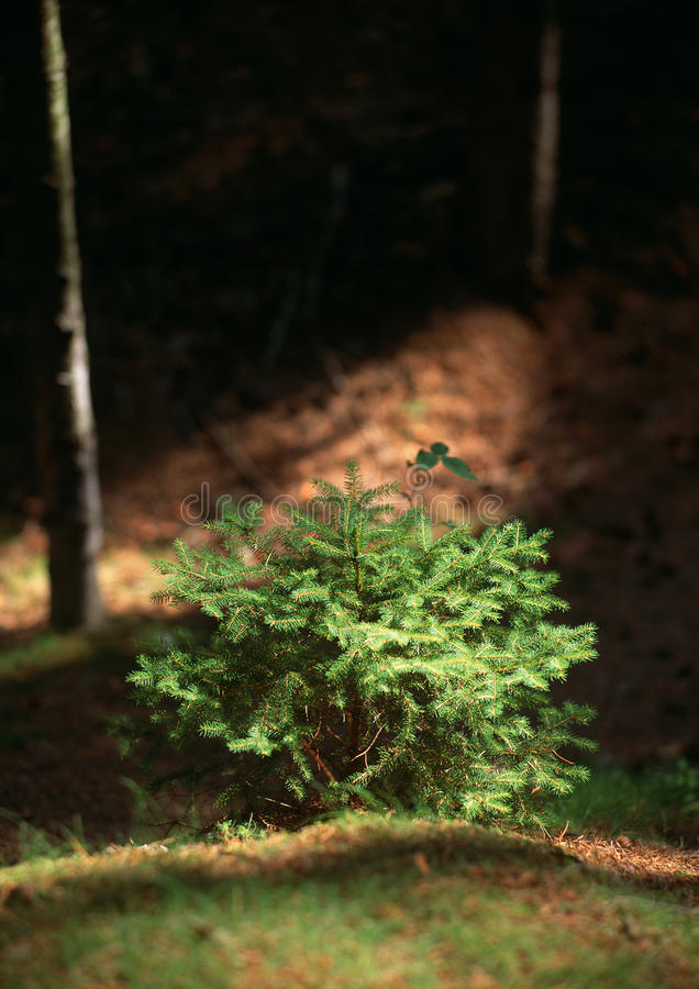 Download Summer stop in the woods stock image. Image of atmosphere - 17401493