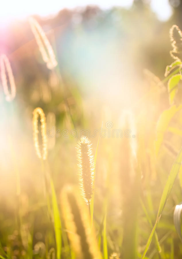 Summer sun. Lawn filled with summer light royalty free stock images