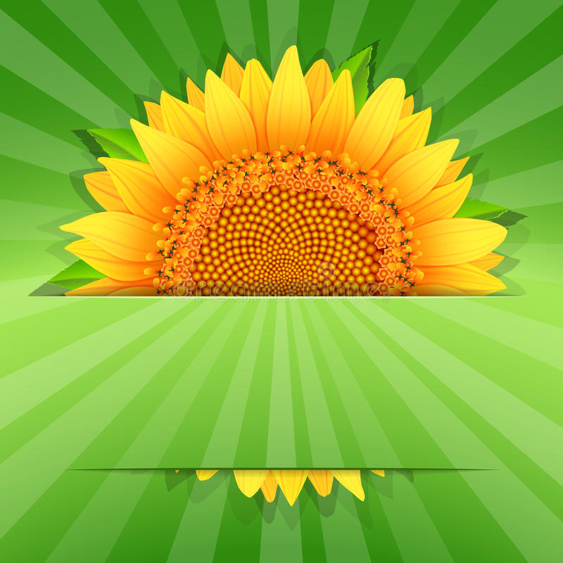 Free Summer Sunflower Poster Template Stock Image - 35749561