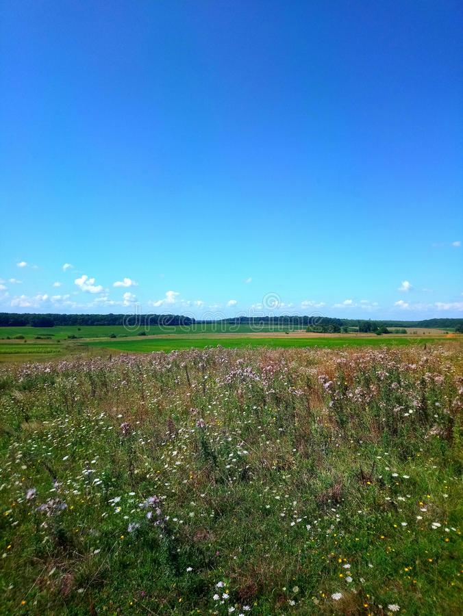 Summer sunny day. Nature. Journey in village. Blue sky with clouds and field with green grass, many flowers. Forest. royalty free stock images