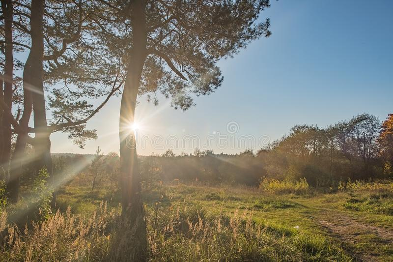 Summer Sunny Trees And Green Grass. Nature Wood Sunlight Background. Instant Toned Image stock images