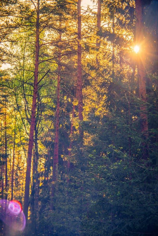 Summer sunrise, beautiful nature. Beautiful Europe nature royalty free stock images