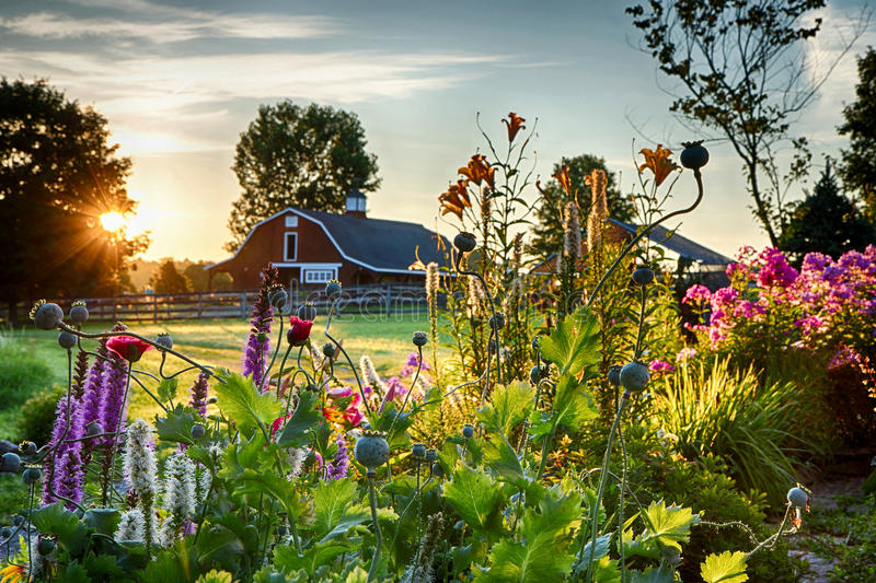 Summer Sunrise Over Barn And Flower Garden Stock Photo