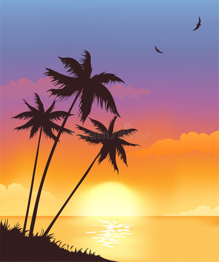 Summer sunset vector illustration