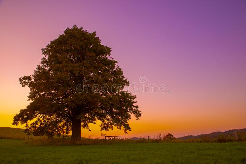 Summer sunset with tree and colours royalty free stock images