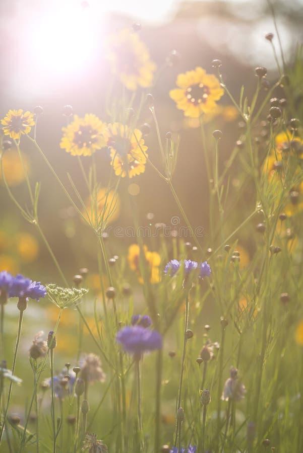 Summer sunshine Instagram effect image of wild flowers. Instagram filter effect flower image of bright sunshine stock photo