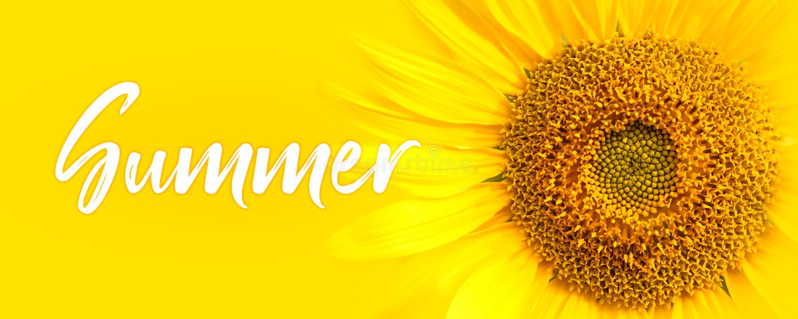Summer text and sunflower close-up details. oncept for summer, sun, sunshine, tropical summer travel and hot days. Summer text and sunflower close-up details of royalty free stock photo