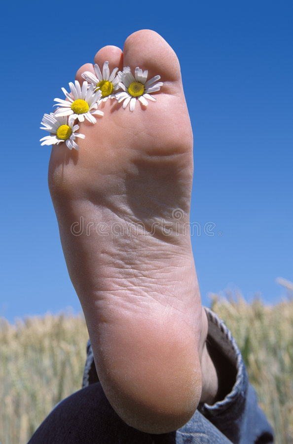 Download Daisy flowers between toes stock photo. Image of person - 8166760