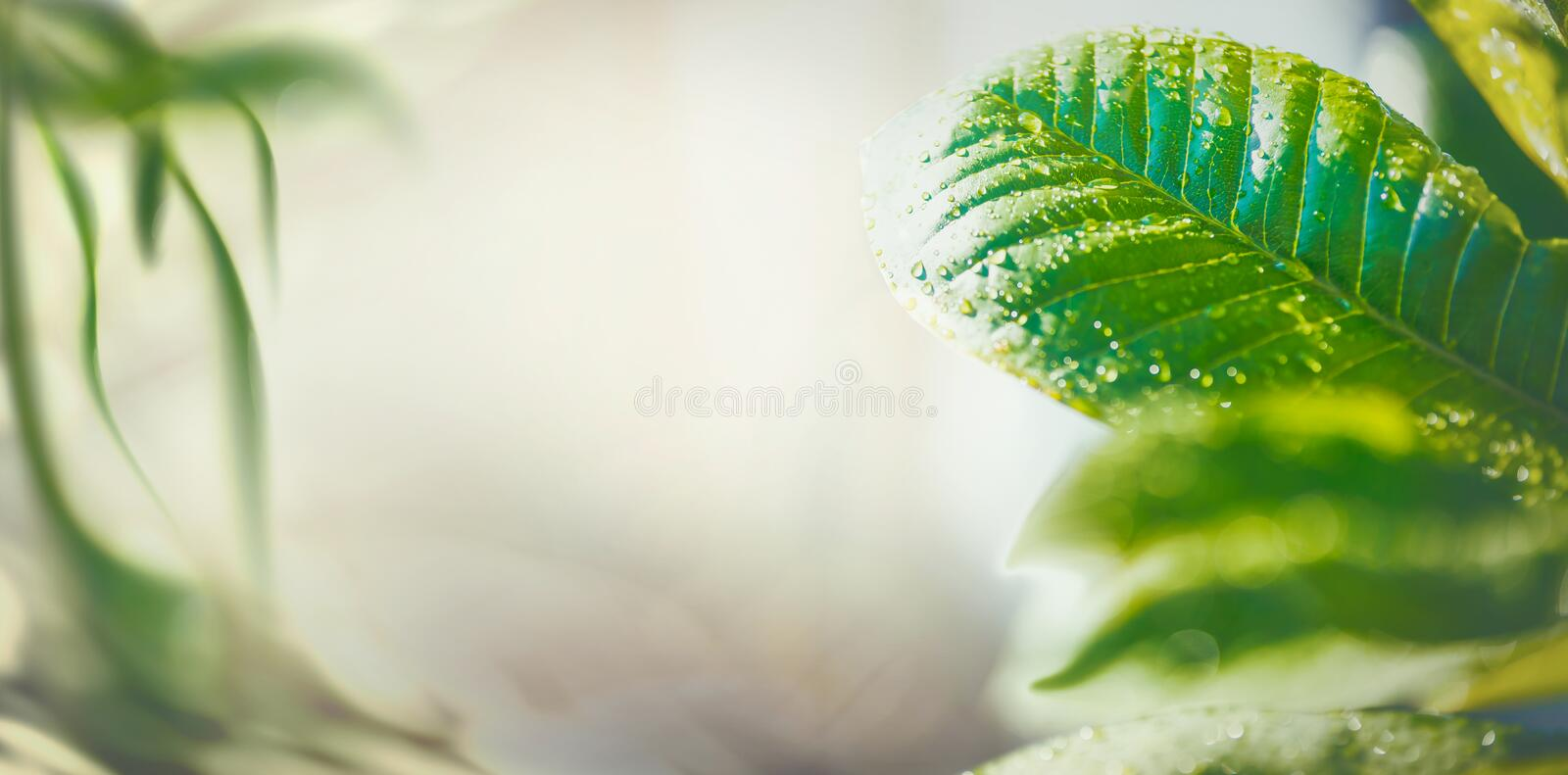 Summer time nature background with green tropical leaves, banner or template stock photos