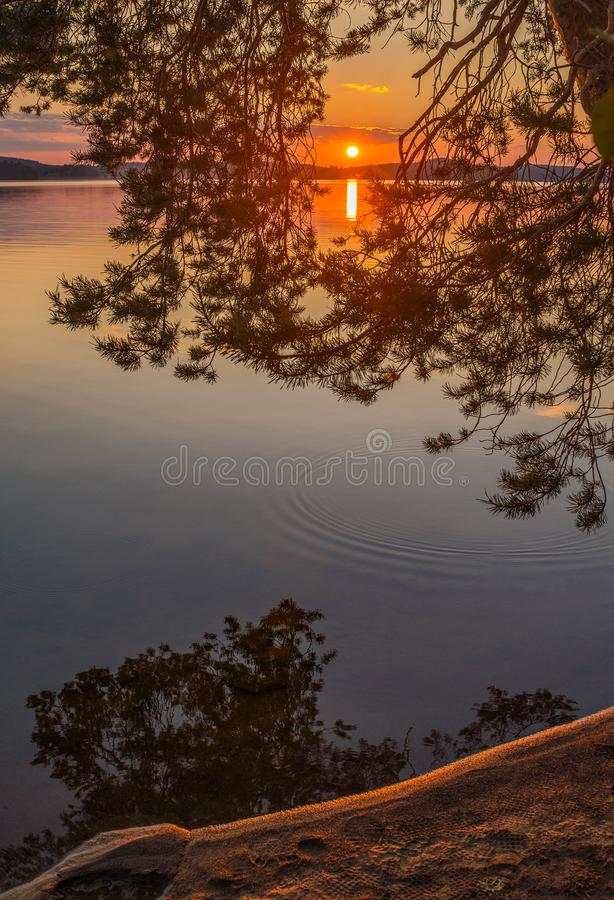 Colorful sunset view through tree branch royalty free stock photo