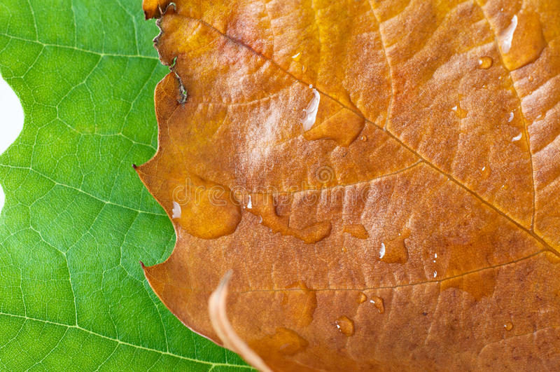 Download Summer to Autumn Leaves stock photo. Image of overlapping - 27629382