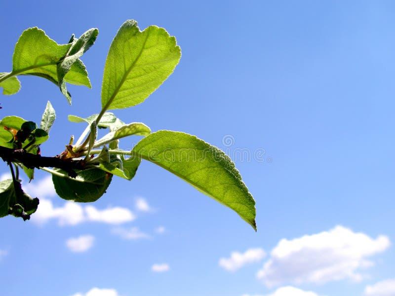Summer tree leaf stock image