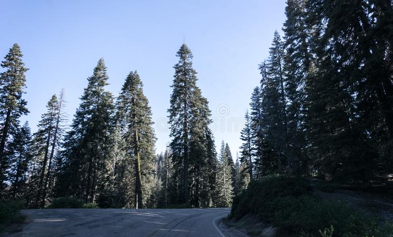 Crossroads of forest roads. Road to Kings Canyon and Sequoia National Park, California, USA royalty free stock image