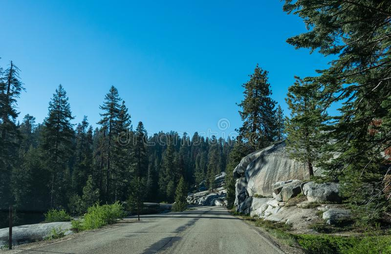 Coniferous forest and rocks. Road to Kings Canyon and Sequoia National Park, California, USA stock image