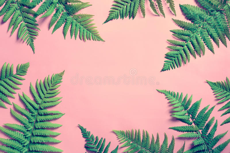 Summer tropical background, fern leaves stock photos