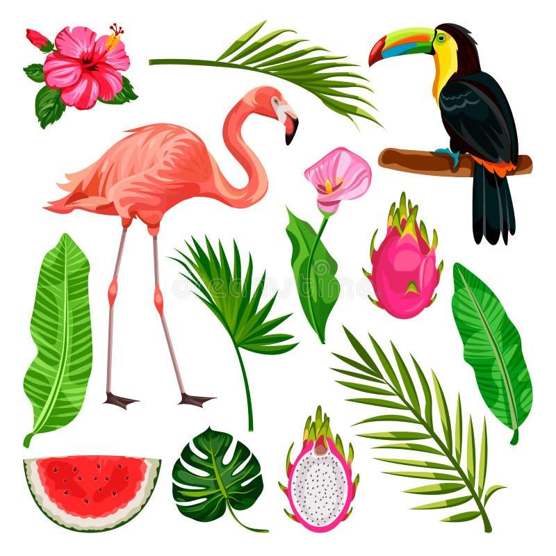 Summer tropical design elements on white background. Vector illustration of toucan, flamingo, palm leaves, dragon fruit vector illustration