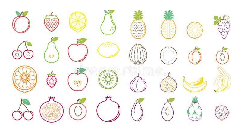 Summer tropical fruit icons for background ads and banners vector illustration