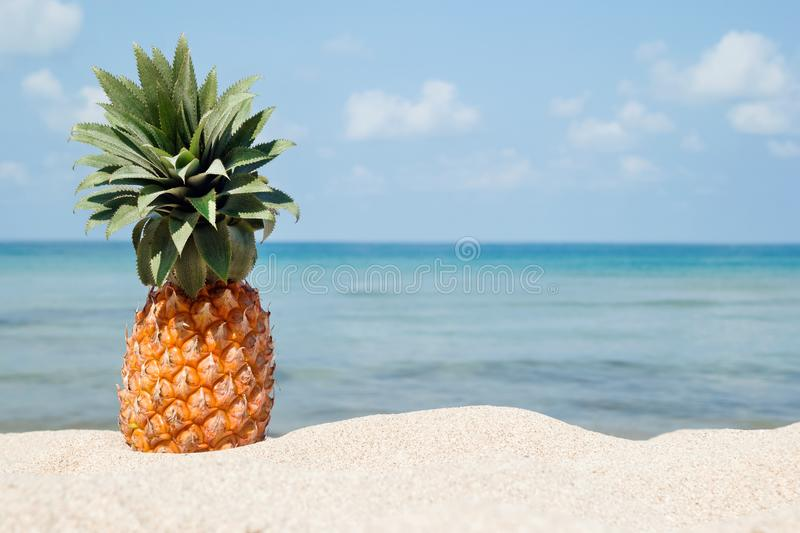 Summer tropical landscape with pineapple on the white sand beach on the background of blue sea and sky. Summer tropical landscape with pineapple on the white stock images