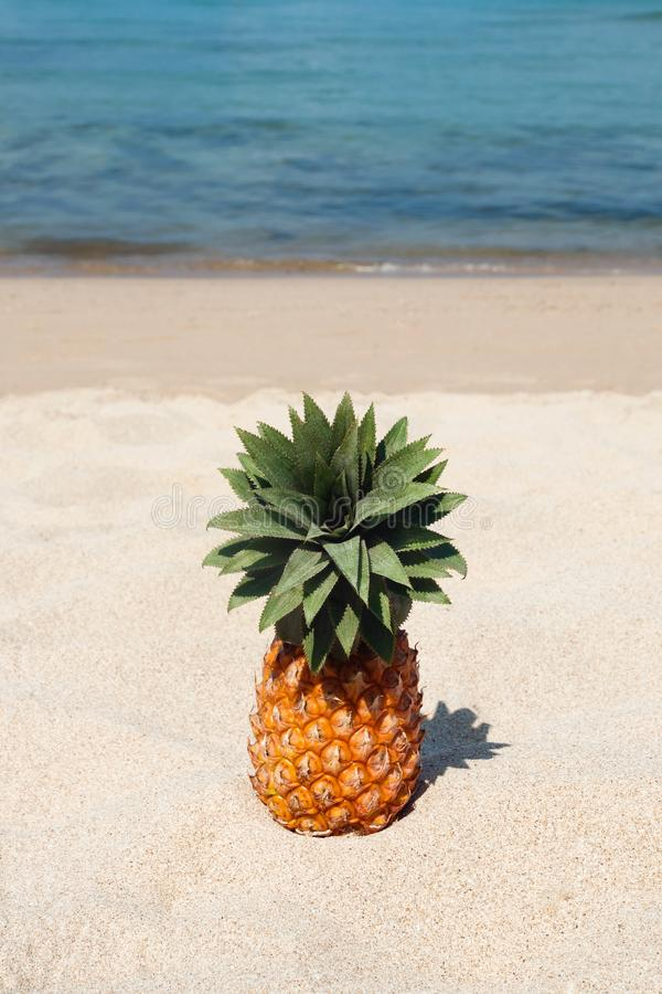 Summer tropical landscape with pineapple on the white sand beach on the background of blue sea. Summer tropical landscape with pineapple on the white sand beach royalty free stock image