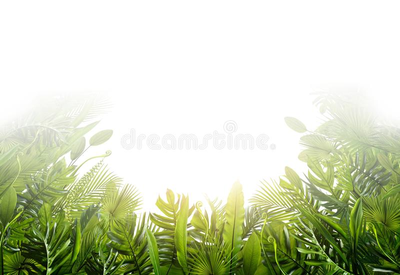 Summer tropical leaves for banner and background. Different leaf, rainforest plant. coppy space and blank text stock image