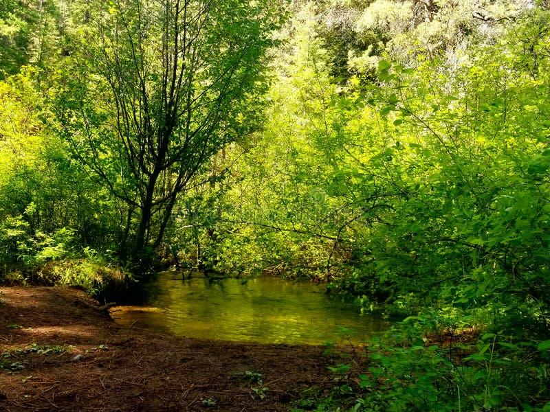 Summer 2018 Tumalo Creek area West end Bend Oregon royalty free stock photo