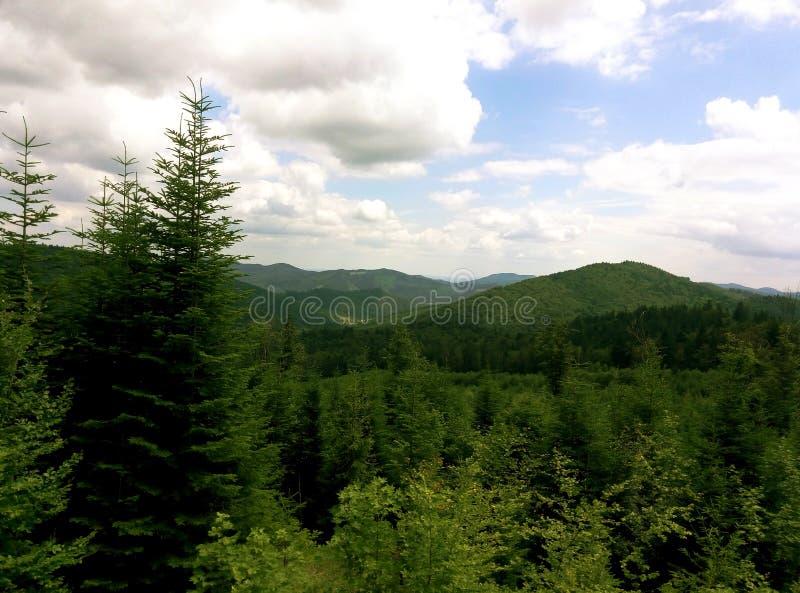 Summer Ukrainian Carpathians royalty free stock photos