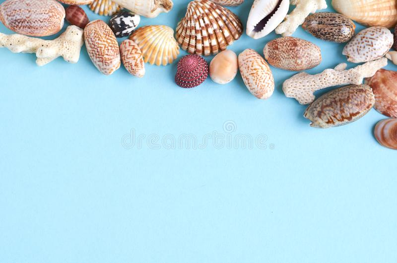 Summer vacation composition idea, seashells on blue background. Flat lay and top view photo, beach, travel, holiday, summertime, relax, tourism, marine royalty free stock photography