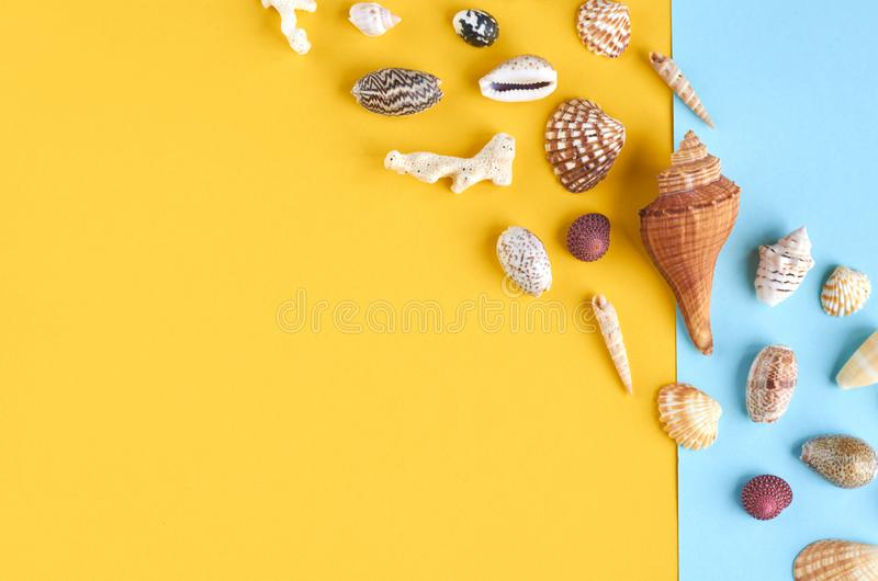Summer vacation composition idea, seashells on blue and yellow background stock photo