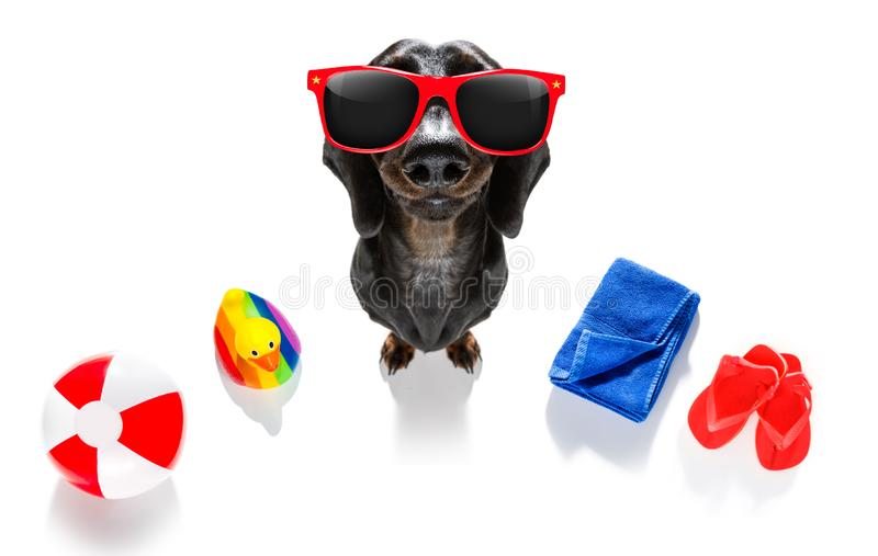 Summer vacation holiday dog. Summer vacation sausage dachshund dog with rubber duck and flip flops, towel wearing sunglasses, isolated on white background stock images