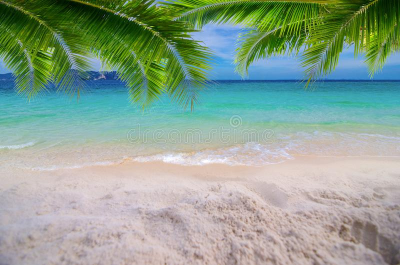 Summer vacation white sand beach with space for text coconut leaves rear frame sea view energetic floor stock photos