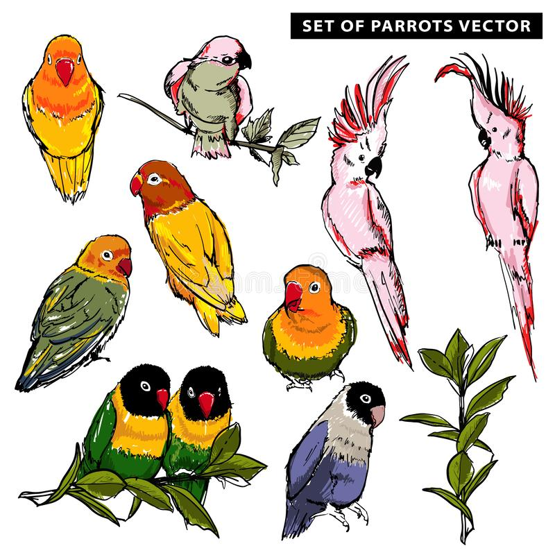 Summer Vector hand drawn of beautiful exotic tropical parrots birds set illustration. Isolated royalty free illustration