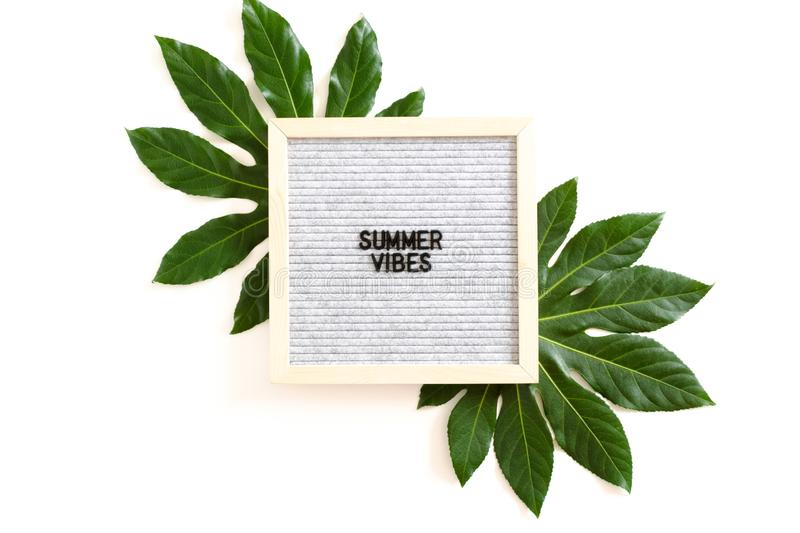 Summer vibes. Composition with green leaves and letterboard with quote Summer vibes royalty free stock image