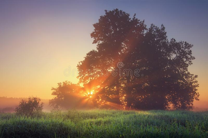 Summer vibrant natural landscape of morning nature on calm meadow with warm sunrays through tree branches. Summer vibrant natural landscape of morning nature on stock image