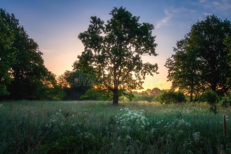 Summer view nature royalty free stock photography