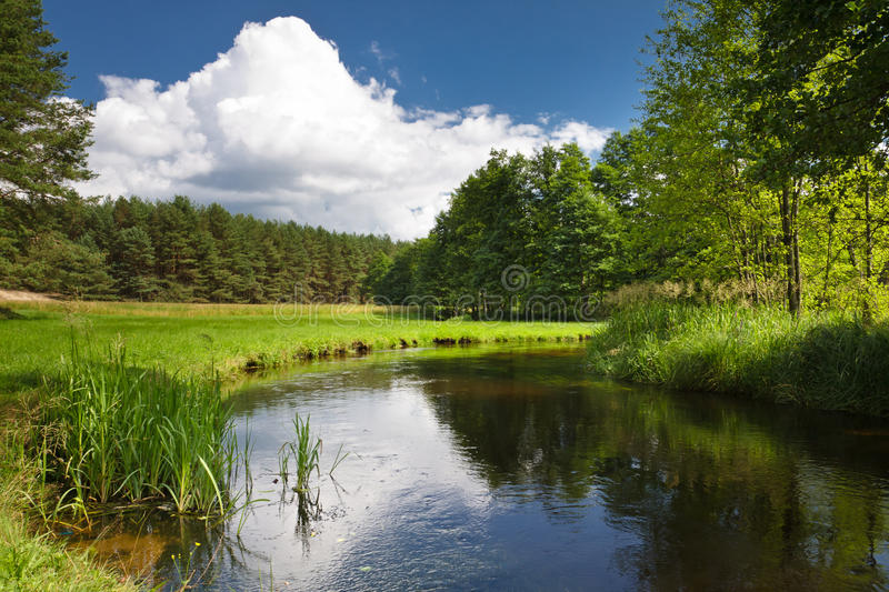Summer view of the river in forest royalty free stock image