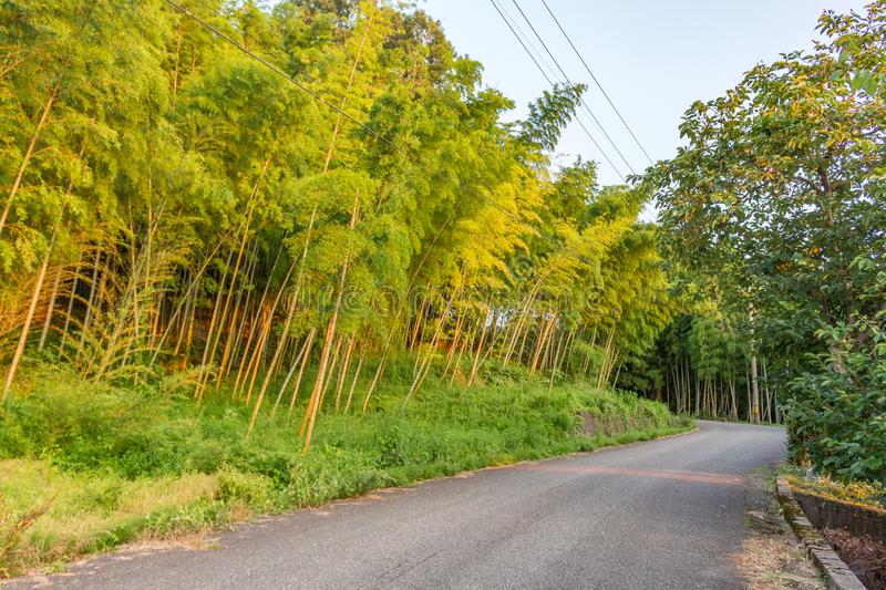 Summer view at sundown of countryside road through forest with tall trees. Fukui Prefecture, Japan royalty free stock photos