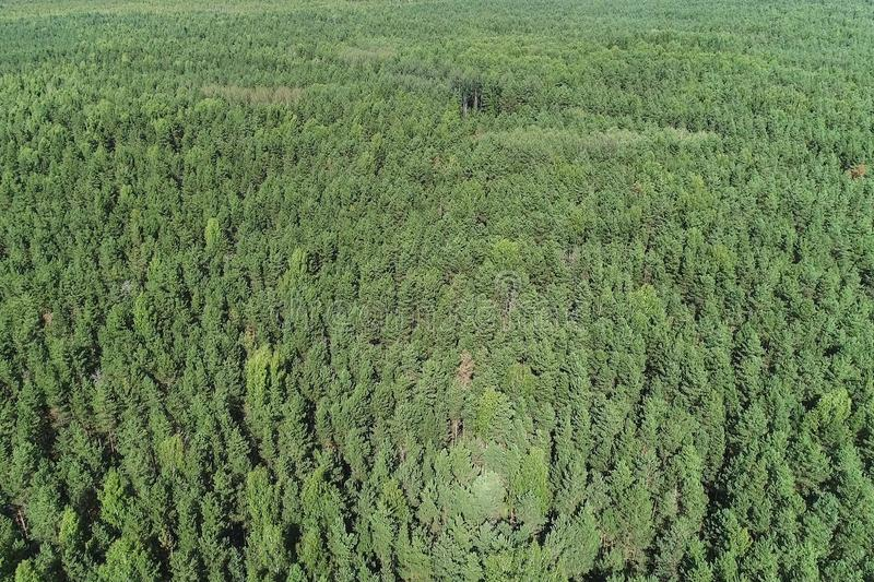 Summer warm sun light forest aerial view. Flying over the forest from above. Top view. stock photography