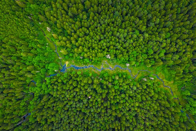 Summer warm sun light forest with river aerial view stock image