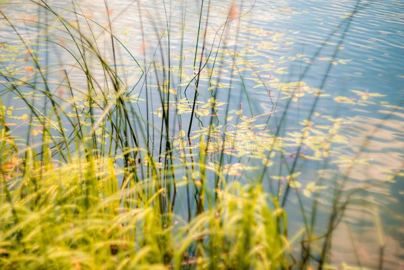 Summer water landscape stock photography