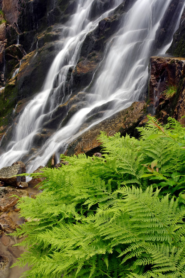 Summer waterfall with fern royalty free stock photos