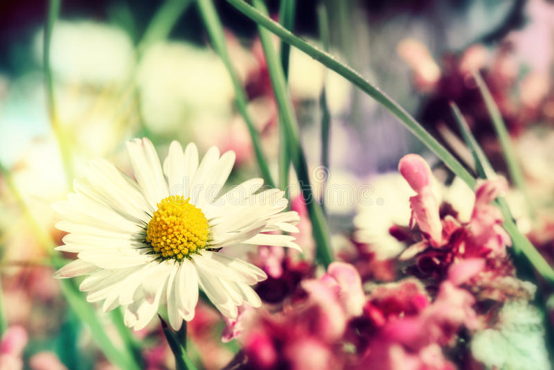 Summer wild flowers closeup. Nature background royalty free stock photos