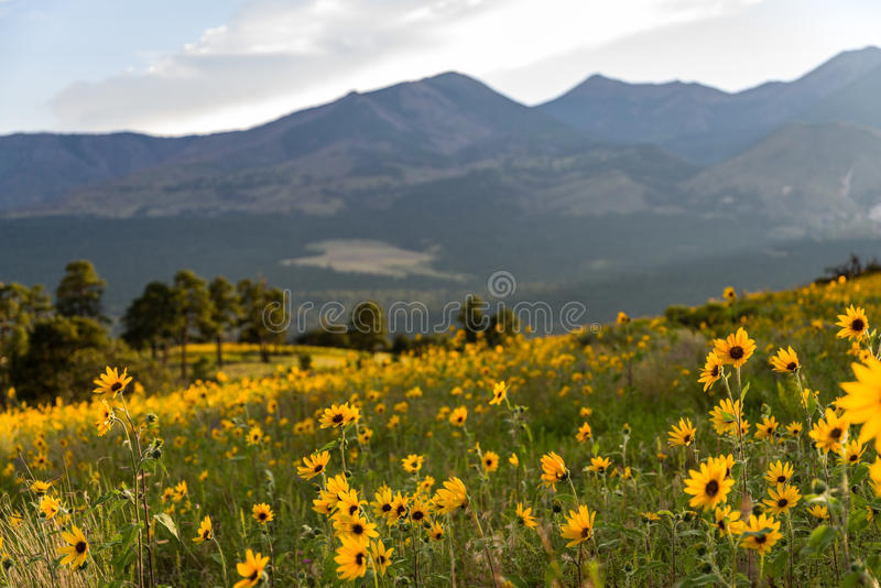 Summer Wildflowers east of the Peaks stock photography