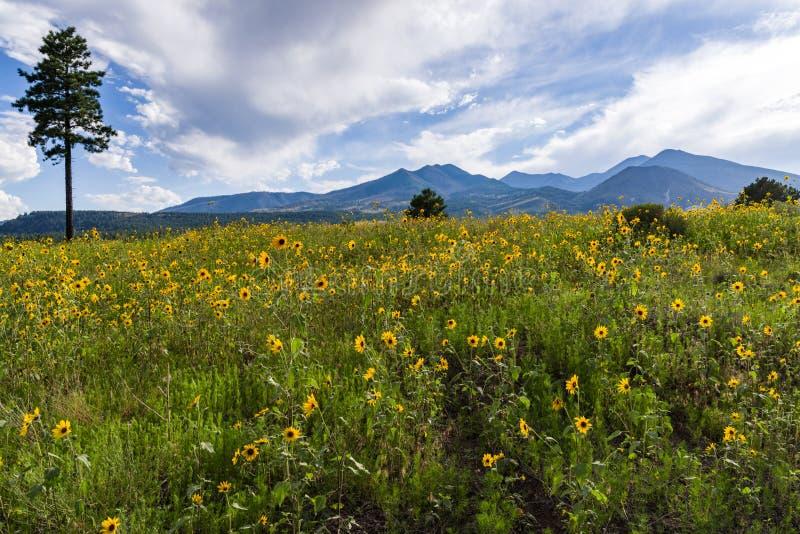 Summer Wildflowers east of the Peaks royalty free stock photos
