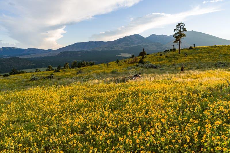 Summer Wildflowers east of the Peaks stock images