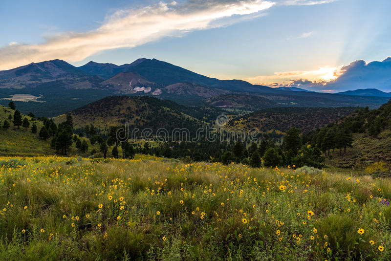 Summer Wildflowers east of the Peaks royalty free stock images