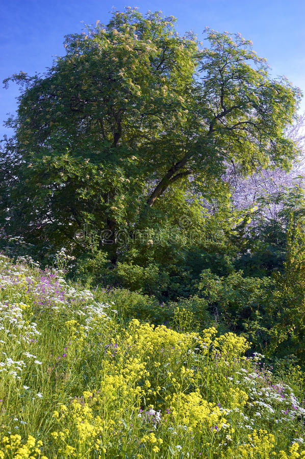 Summer wildflowers and trees stock image