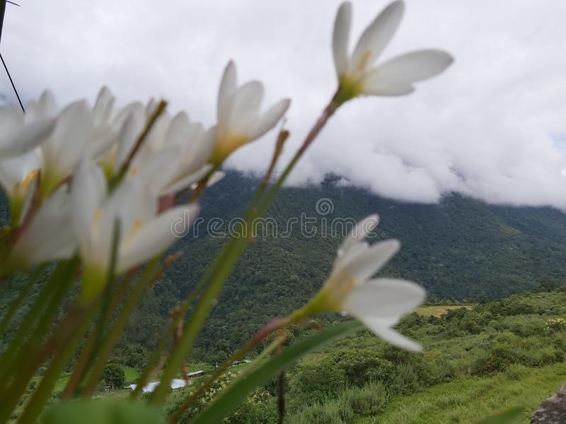 Summer is wonderful and lovely with green plant and white blanket like cloud with beautiful flower stock images
