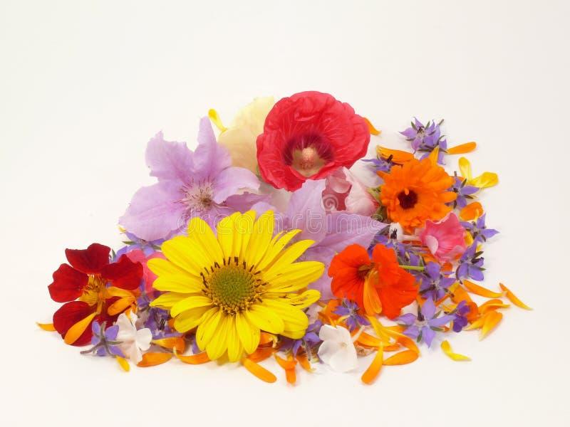 summerflowers 免版税库存照片